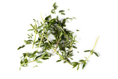 Chopped thyme branch and leaves royalty free stock image