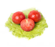 Chopped tomatoes lying on a sheet of green salad Royalty Free Stock Photo