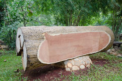Chopped tree log lies on the ground Royalty Free Stock Photography