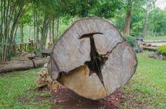 Chopped tree log lies on the ground Stock Photos