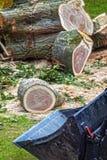 Chopped tree Stock Photos