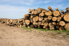Chopped tree logs Stock Photos