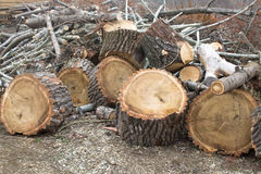 Chopped tree remains. Remains of a chopped tree: logs and branches stock photo