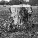 Chopped tree Royalty Free Stock Photo