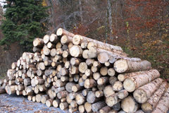 Chopped trees. A selection of tree trunks laying by the road Royalty Free Stock Photo
