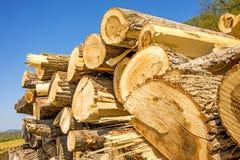Chopped trees Stock Photos