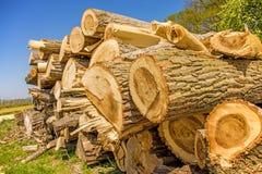 Chopped trees Royalty Free Stock Image