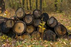 Chopped trees Stock Photo