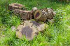 Chopped up tree trunk on grass. In summer Royalty Free Stock Photography