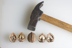 Chopped walnuts. Stock Image