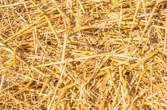 Chopped wheat straw as a texture. Roughly chopped wheat straw as a texture stock photos