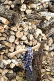 Chopped Wood. A pile of chopped wood with an axe stuck in a stump Royalty Free Stock Images