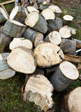 Chopped wood Stock Image