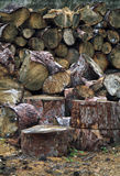 Chopped wood Royalty Free Stock Image
