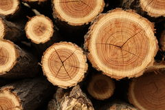 Chopped Wood. Stack of freshly cut fire wood Stock Photography