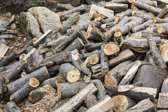 Chopped wood beech trees in the background Royalty Free Stock Photo