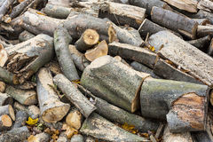 Chopped wood beech trees in the background Royalty Free Stock Photos