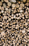 Chopped wood. In forest of dolomites mountain Stock Image