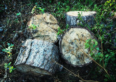 Chopped wood in forest Stock Photo