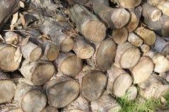 chopped wood Royalty Free Stock Image