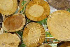 Chopped Wood and Logs Royalty Free Stock Photography
