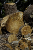 Chopped wood logs Stock Photo