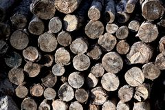 Chopped wood logs for sale. Industrial video Royalty Free Stock Photo