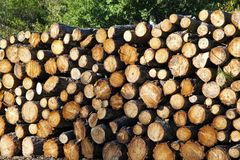 Chopped wood logs for sale. Industrial video Stock Photography