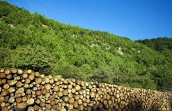 Chopped wood logs for sale. Industrial video Royalty Free Stock Photography