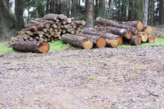 Chopped wood logs for sale use in fire place at home stored on forest woods green biomass energy. Uk royalty free stock photo