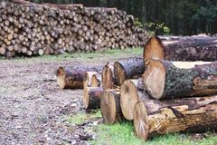 Chopped wood logs for sale use in fire place at home stored on forest woods green biomass energy. Uk stock photos