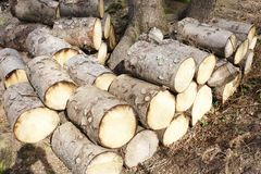Chopped wood logs for sale use in fire place at home stored on forest woods green biomass energy royalty free stock photo