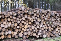 Chopped wood logs for sale use in fire place at home stored on forest woods green biomass energy. Uk stock images