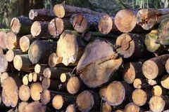 Chopped wood logs for sale use in fire place at home stored on forest woods green biomass energy. Uk stock photography