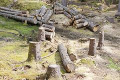 Chopped wood logs for sale use in fire place at home stored on forest woods green biomass energy stock images