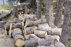 Chopped wood logs for sale use in fire place at home stored on forest woods green biomass energy. Uk royalty free stock image