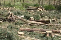 Chopped wood logs stack for fire place at home on forest woodlands green biomass energy. Uk stock photos