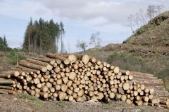 Chopped wood logs stack for fire place at home on forest woodlands green biomass energy stock photography