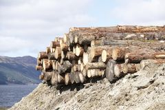 Chopped wood logs stack for fire place at home on forest woodlands green biomass energy royalty free stock photo