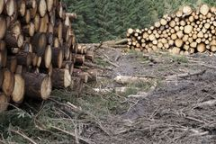 Chopped wood logs stack for fire place at home on forest woodlands green biomass energy. Uk royalty free stock photography