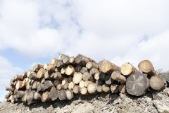 Chopped wood logs stack for fire place at home on forest woodlands green biomass energy royalty free stock photography