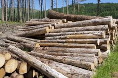 Chopped wood logs stacked in forest woodlands renewable green biomass energy summer sun Loch Lomond blue sky. Uk royalty free stock image