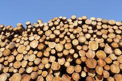Chopped wood logs stacked in forest woodlands renewable green biomass energy summer sun Loch Lomond blue sky. Uk stock image