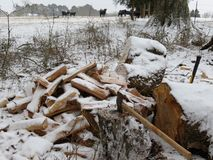 Chopped Wood Pile and Axe at Rest royalty free stock images