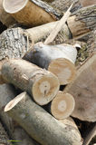 Chopped wood. A pile of chopped wood to be used in winter Stock Photography