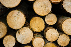 Chopped wood. Royalty Free Stock Images