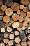 Chopped wood stacked Royalty Free Stock Photography