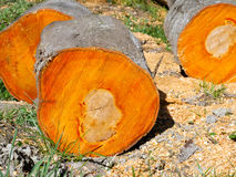 Chopped wooden logs Royalty Free Stock Photography