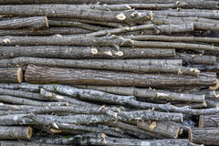 Chopped wooden logs Stock Photography
