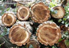 Chopped wooden logs Royalty Free Stock Image